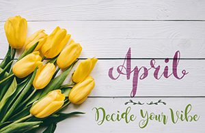 April hand lettering calligraphy. Yellow tulips bunch on white wooden planks rustic barn rural table background.